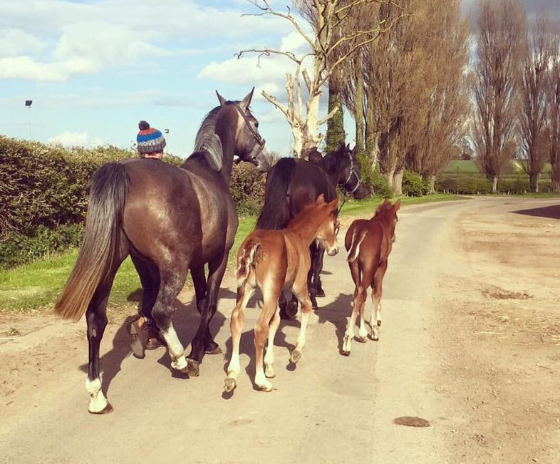 competition stud, training yard and stud livery in Lincolnshire and UK