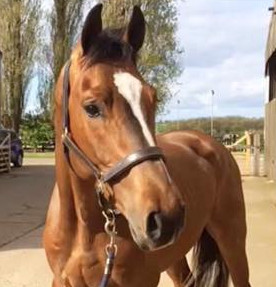 competition stud, training yard, stud livery and horses for sale in Lincolnshire UK